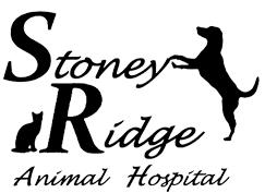 Veterinarians Hannon | Stoney Ridge Animal Hospital